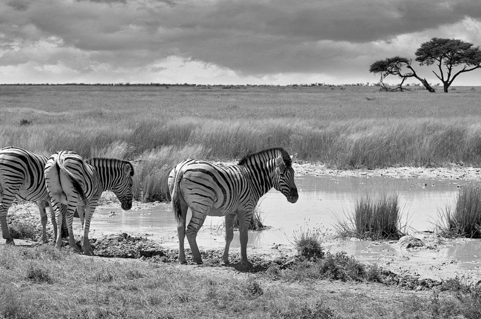 Фотосафари в Намибия