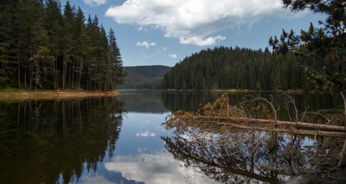 снимка Георги Величков